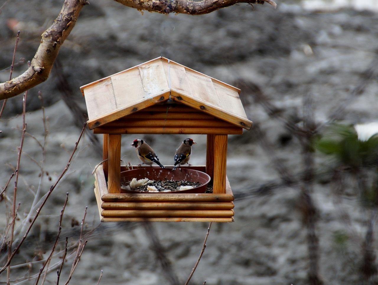 Чем можно и чем нельзя кормить птиц зимой 4