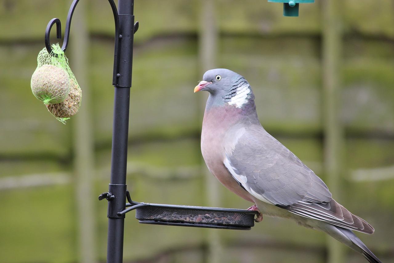 Чем можно и чем нельзя кормить птиц зимой 5