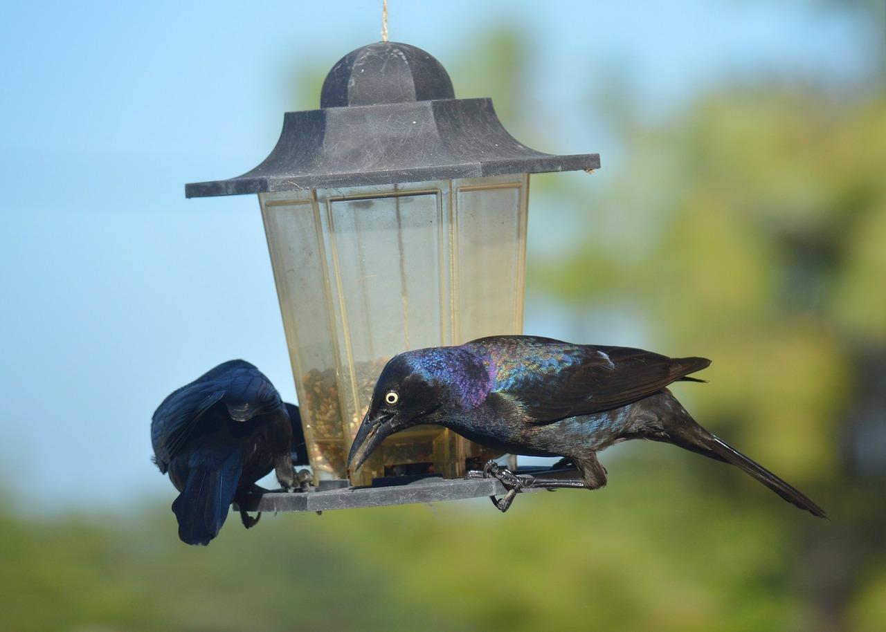 Чем можно и чем нельзя кормить птиц зимой