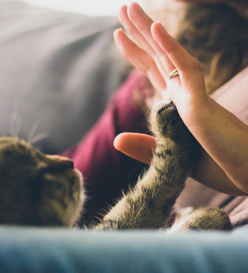 лечение людей животными 4