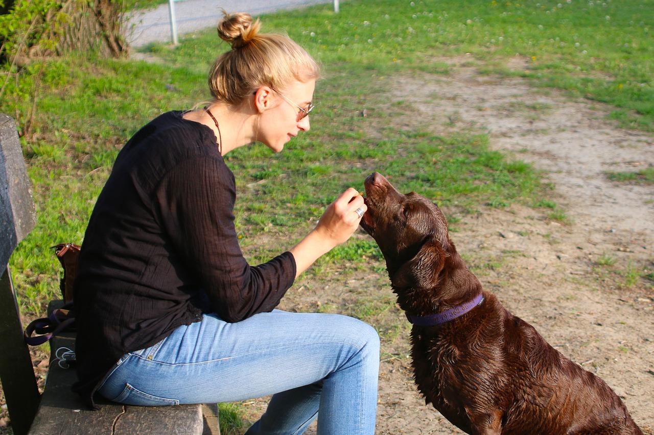 лечение людей животными 5