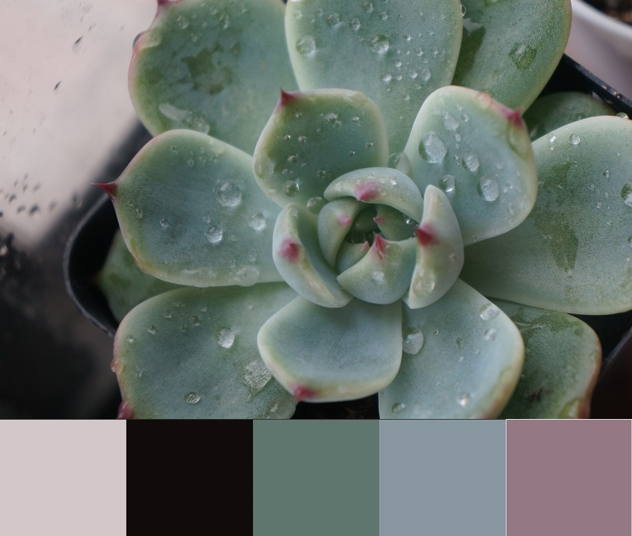 Cvet Limpet shell, палитра сочетания цвета и оттенков 11