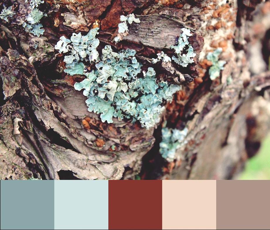 Cvet Limpet shell, палитра сочетания цвета и оттенков 12