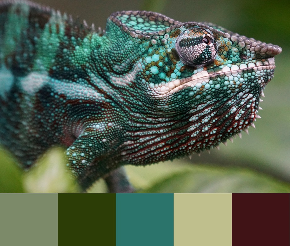 Цвет Limpet shell, палитра сочетания цвета и оттенков 6