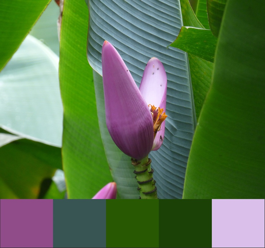 Cvet Limpet shell, палитра сочетания цвета и оттенков 9