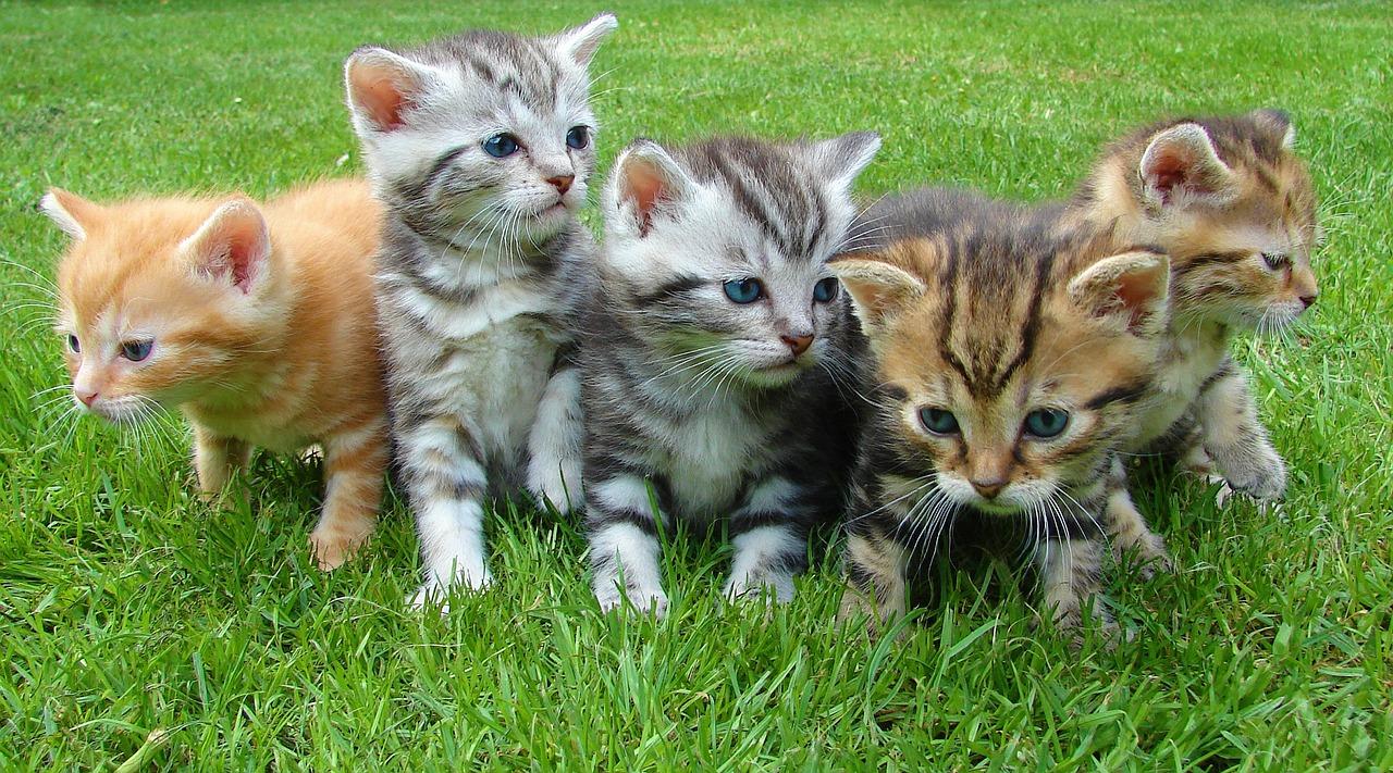 клички для котов и кошек 1