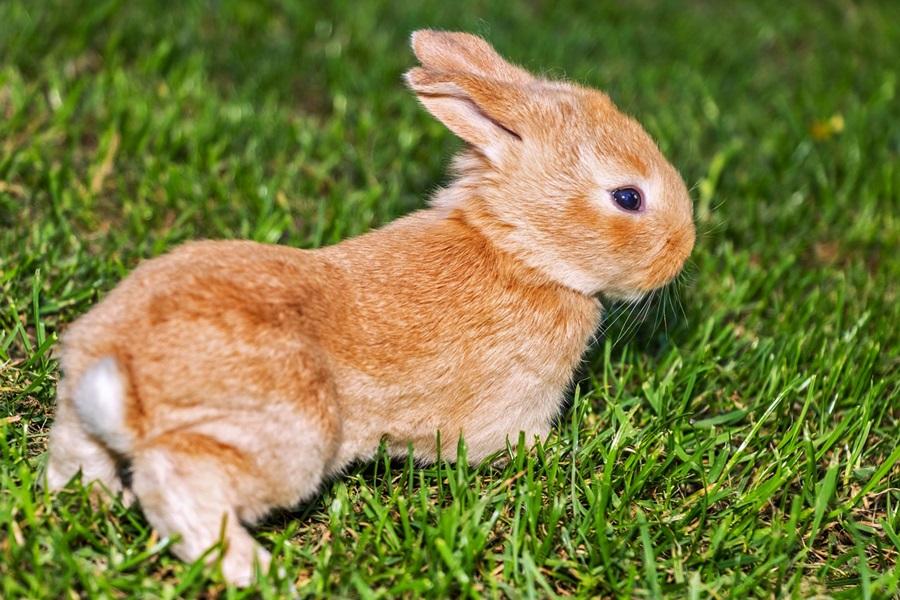 как назвать кролика 1