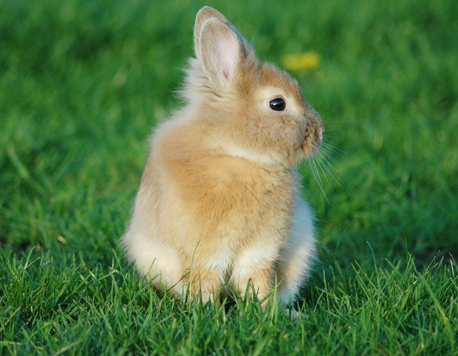 как назвать кролика 2