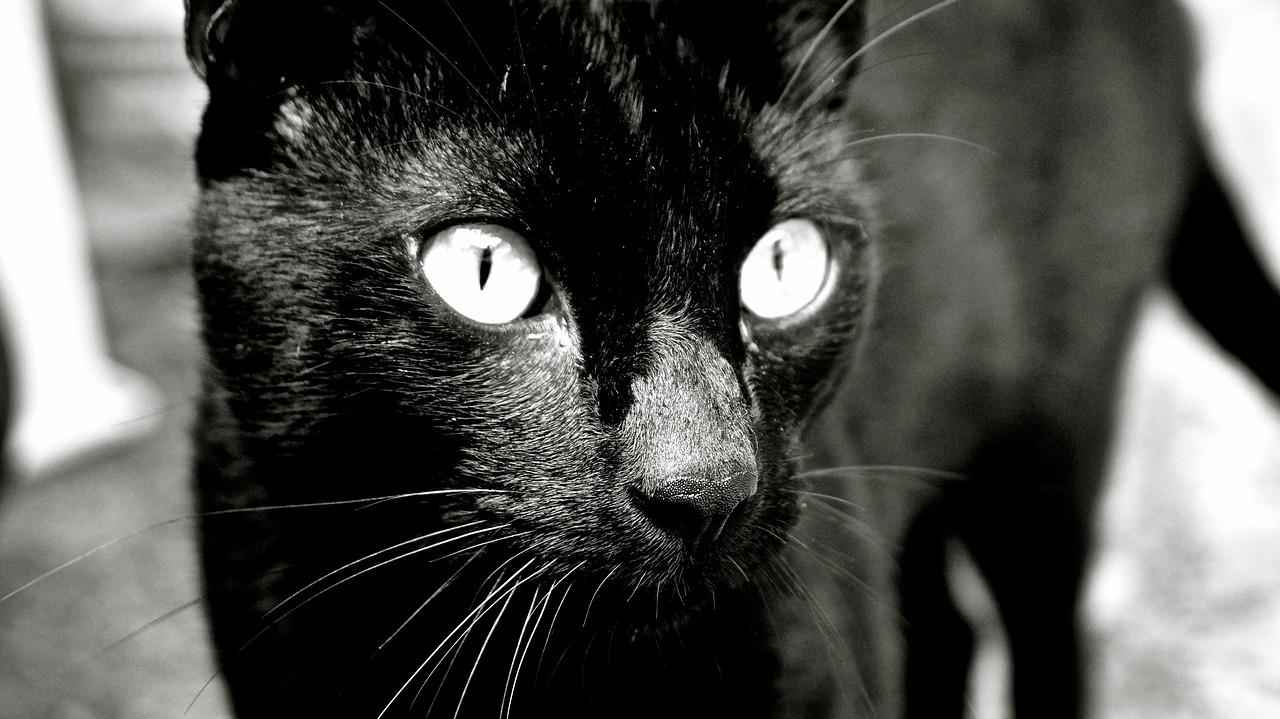 коты едят котят 1