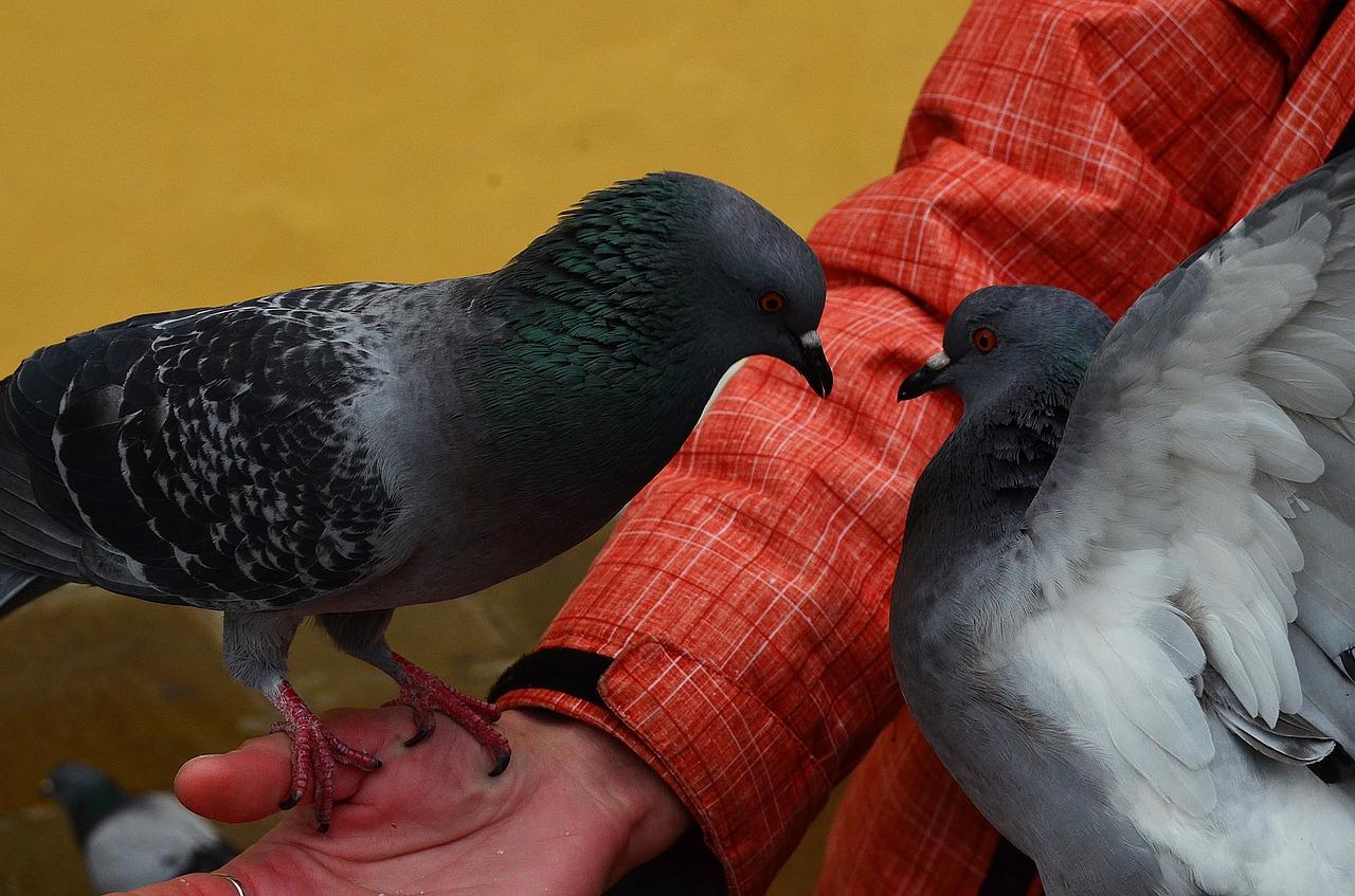 клички для птиц 1