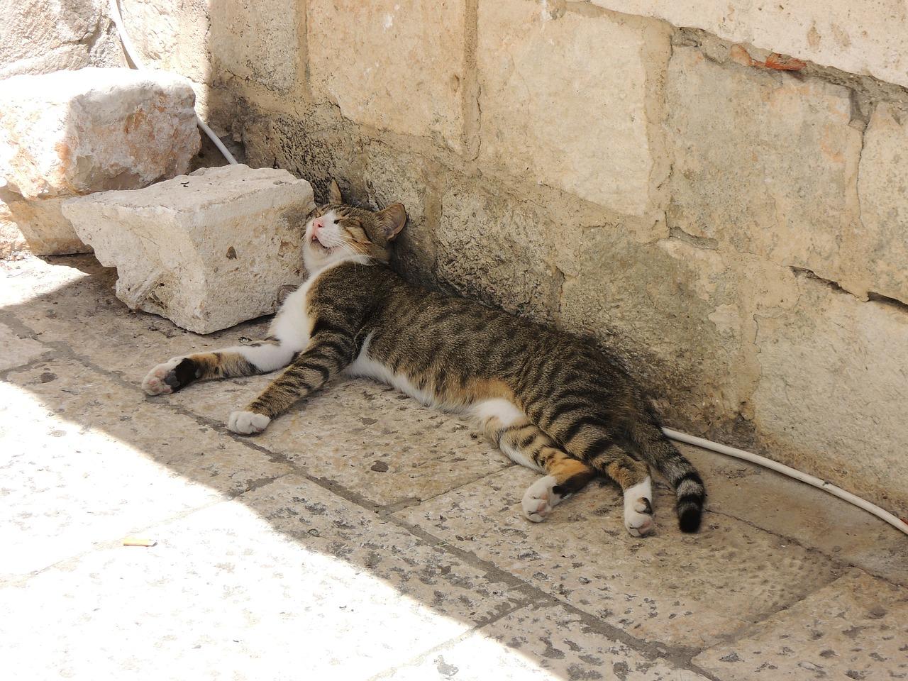 спящий кот фото 10