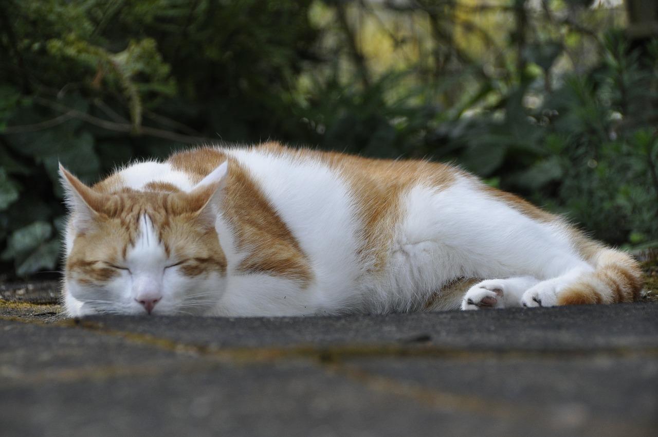спящий кот фото 11