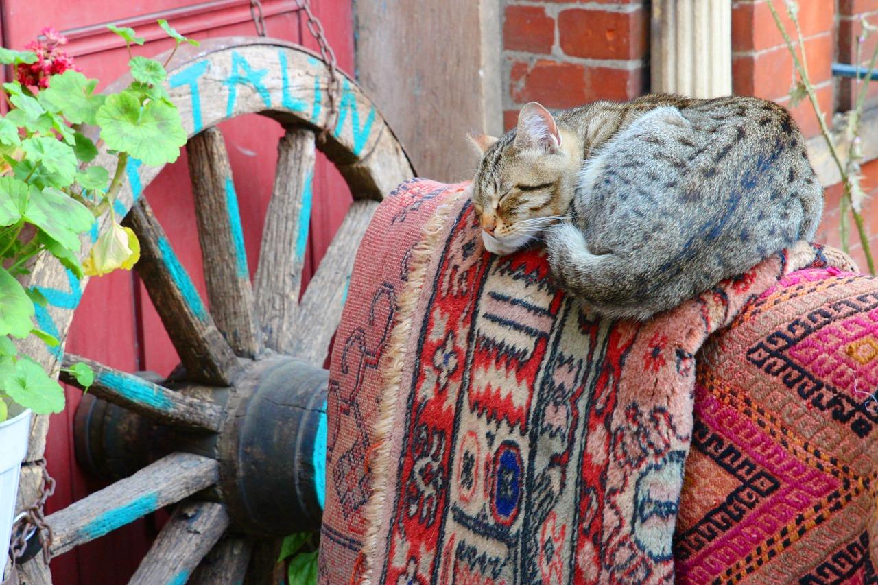 спящий кот фото 15