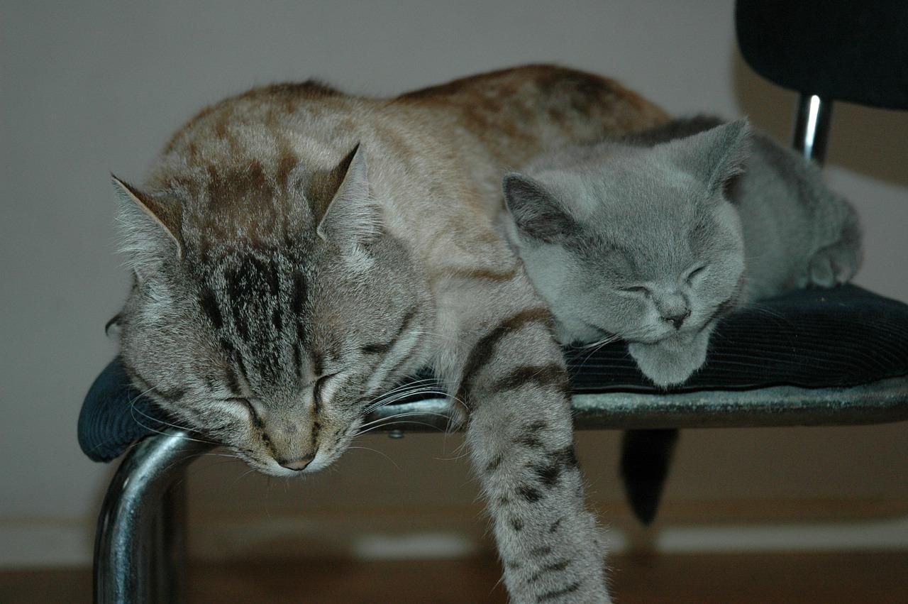 спящий кот фото 16