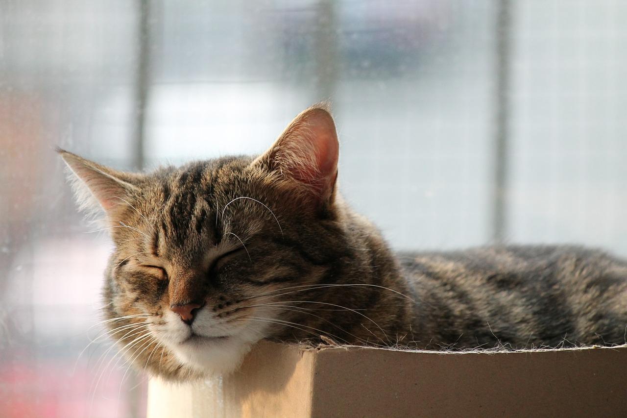 спящий кот фото 17