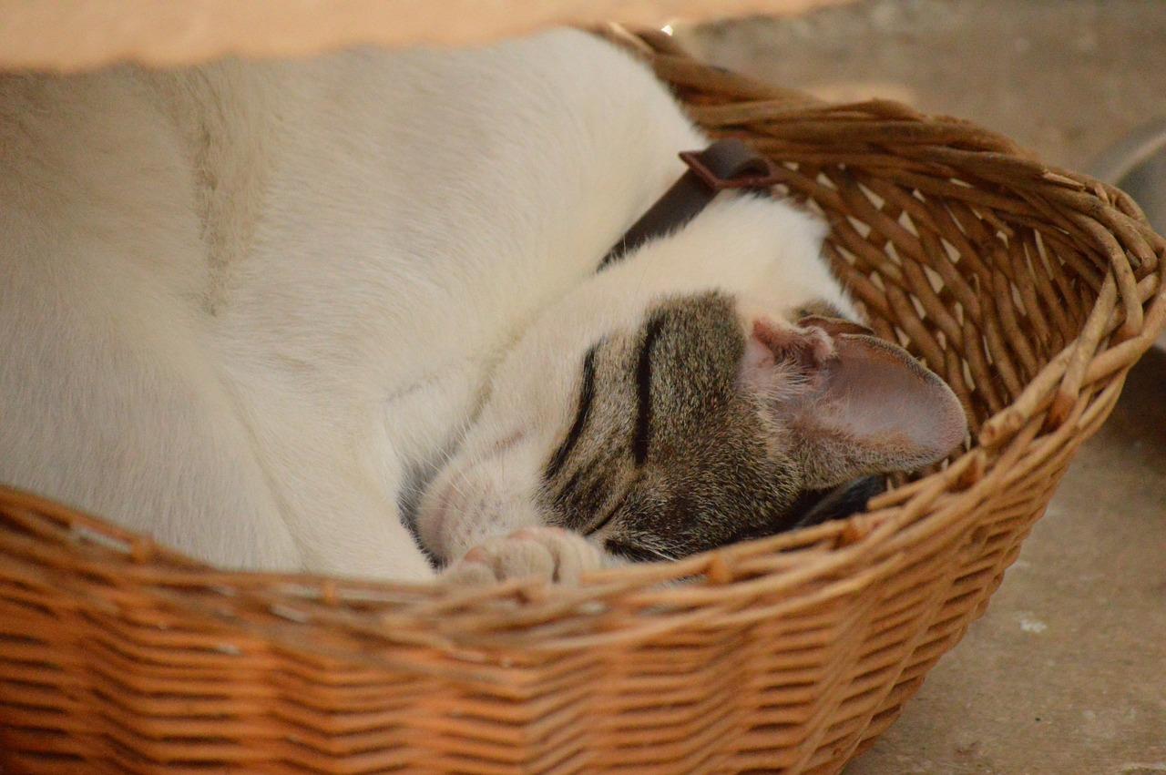 спящий кот фото 20