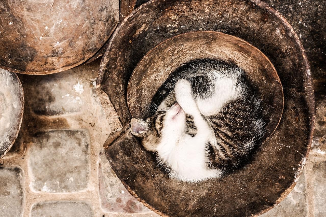 спящий кот фото 21