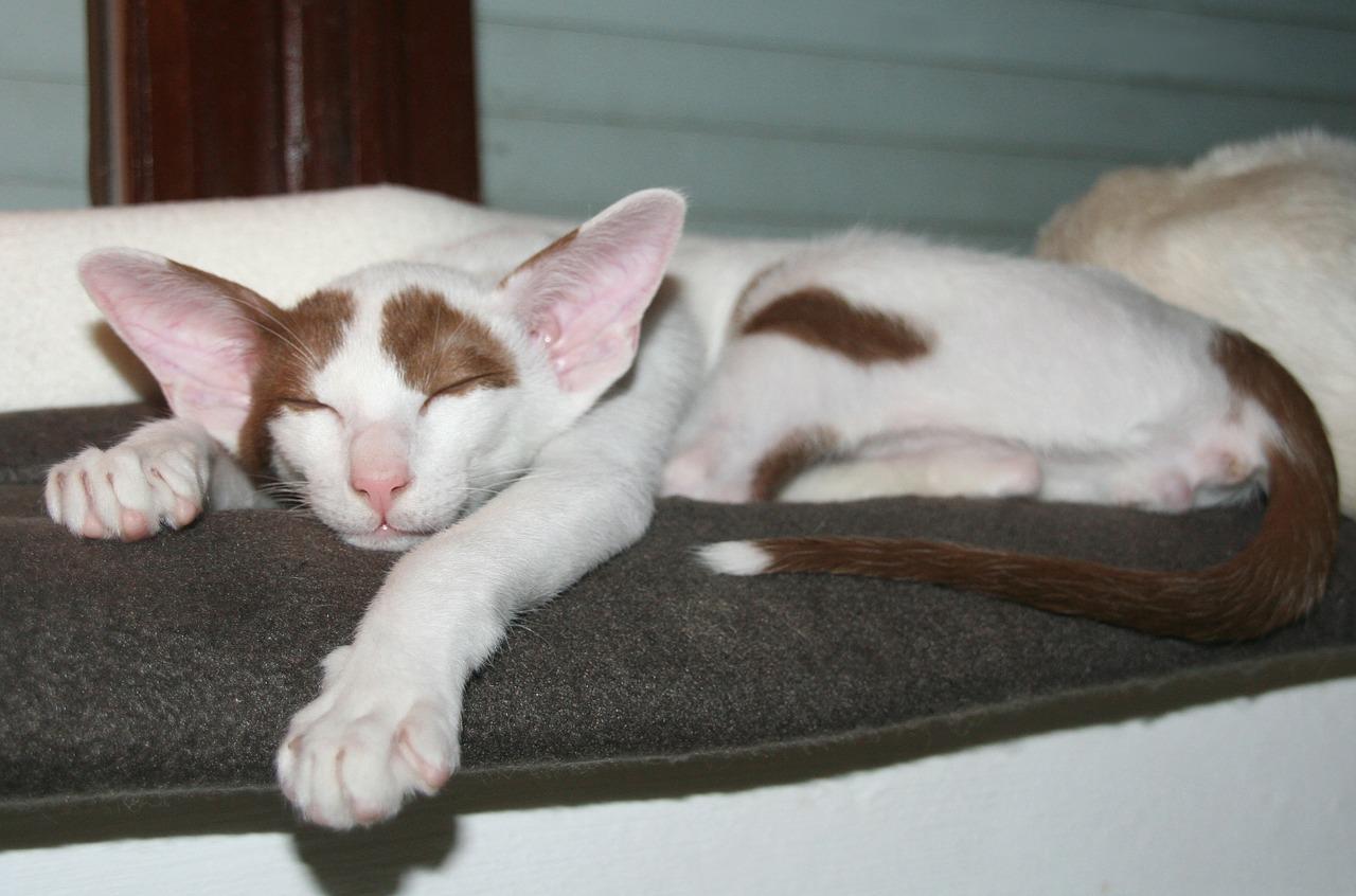 спящий кот фото 22