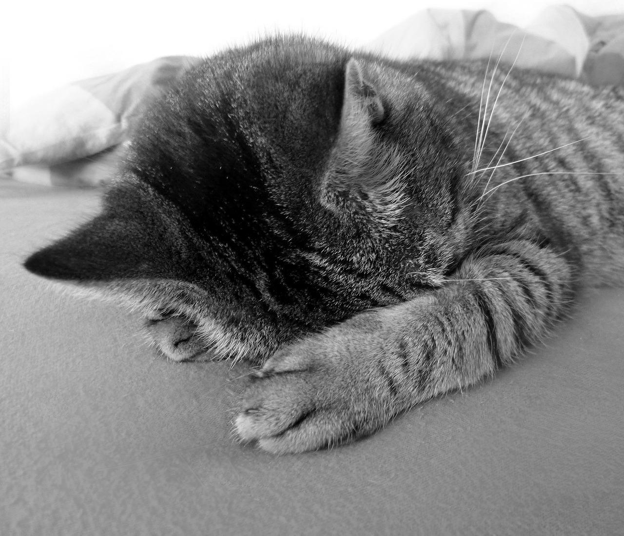 спящий кот фото 3