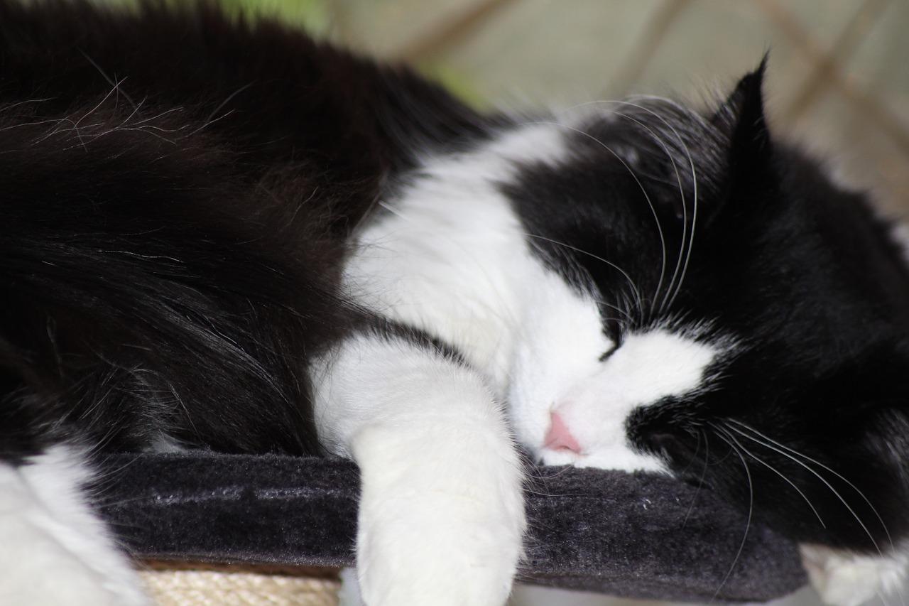 спящий кот фото