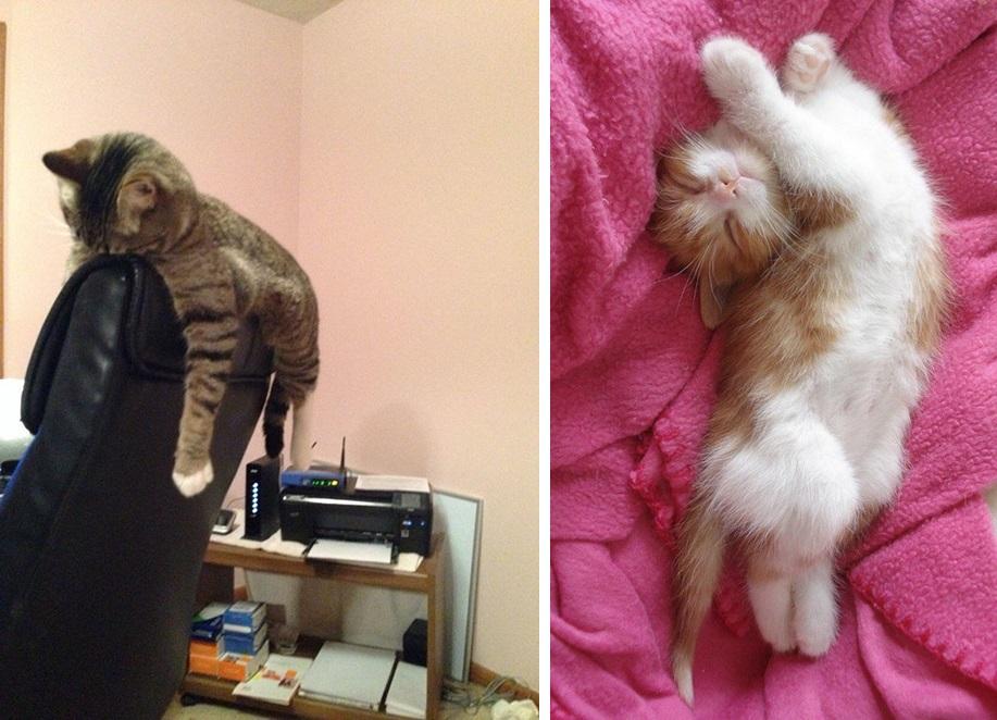 кот спит фото 010