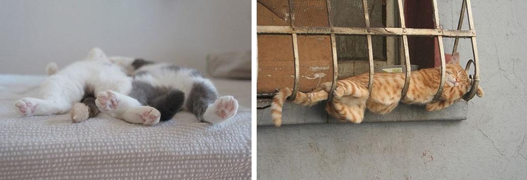 кот спит фото 02