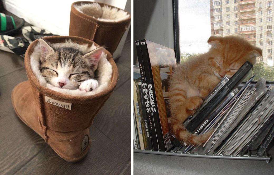 кот спит фото 03
