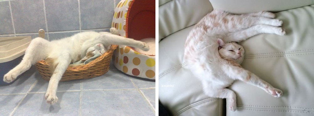 кот спит фото 05