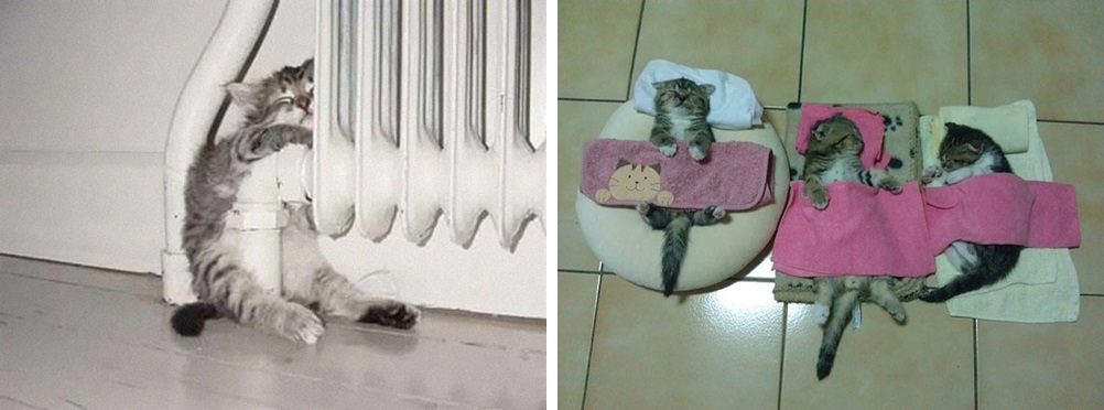 кот спит фото 07