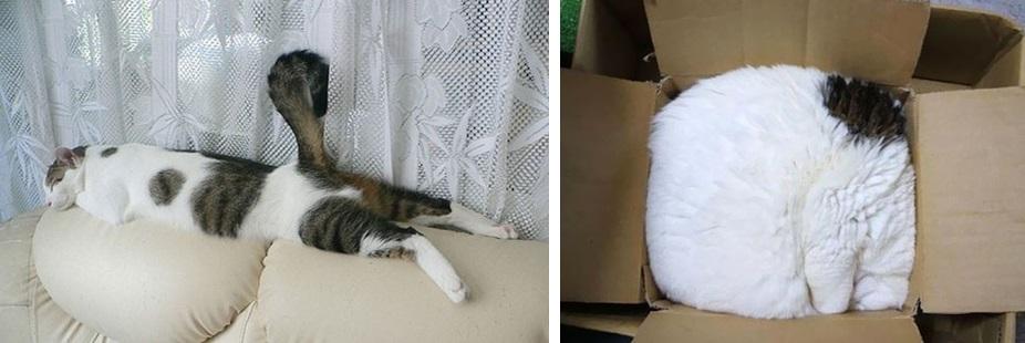 кот спит фото 08