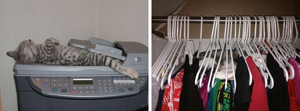 кот спит фото 09