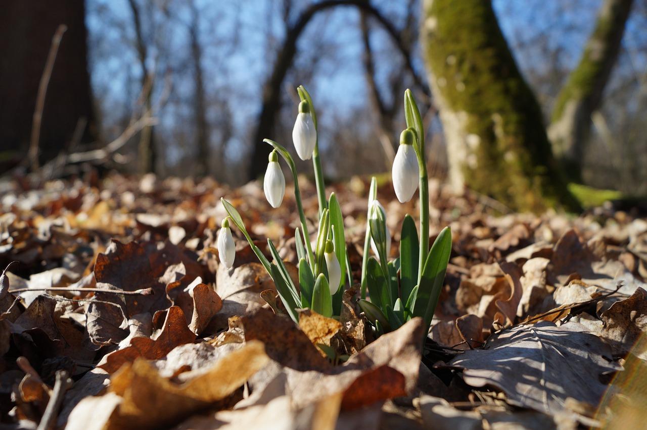 весна фото 19