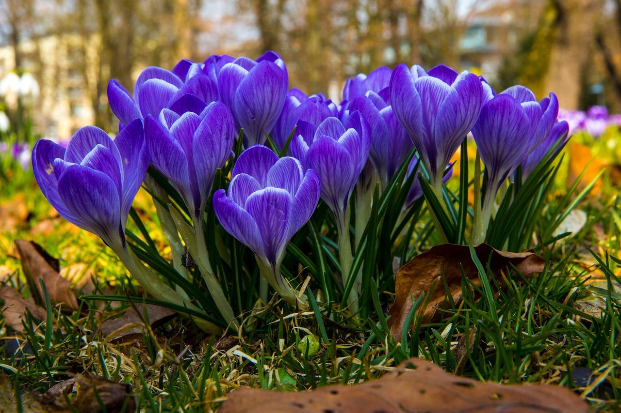 весна фото 3