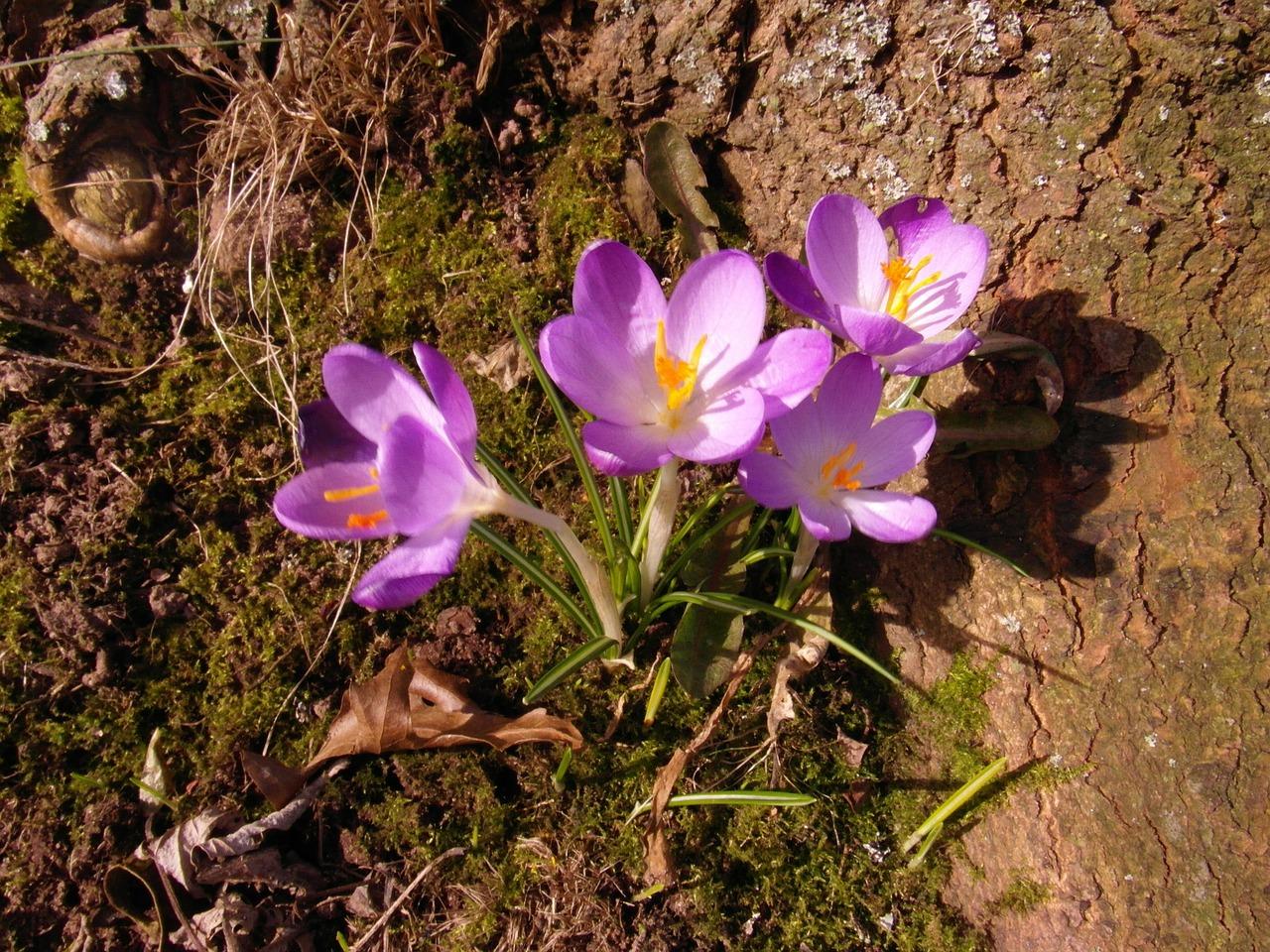 весна фото 8