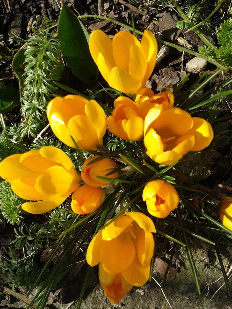весна фото 9