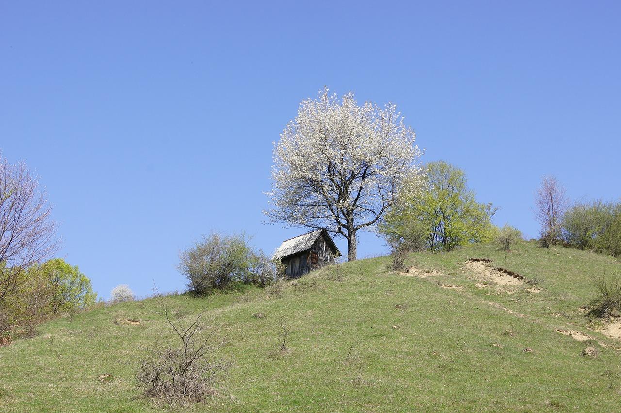 домик в деревне весной фото 17