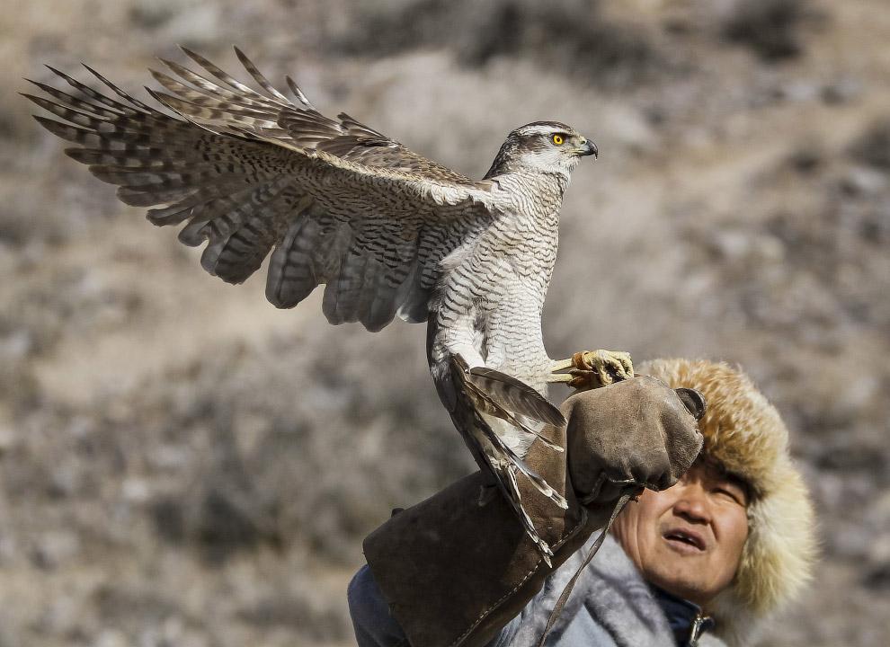 охота с беркутом 9