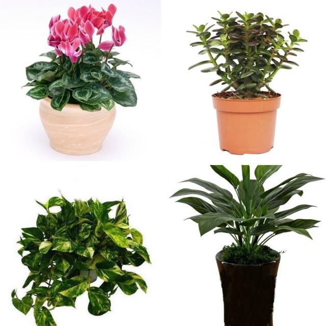 ядовитые растения для животных