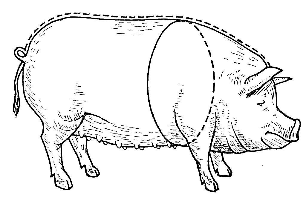 таблица веса свиньи 2