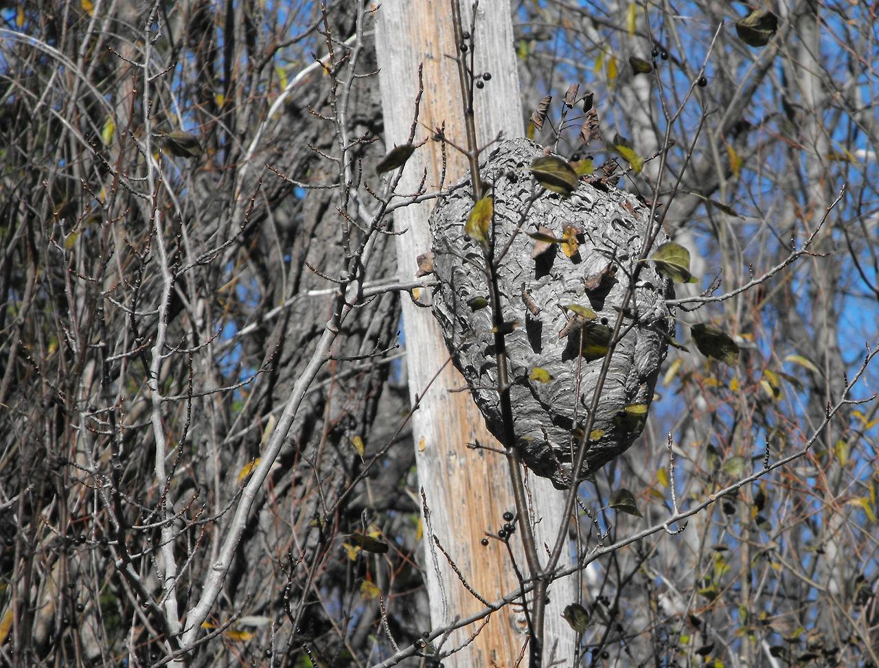 гнездо шершня 3