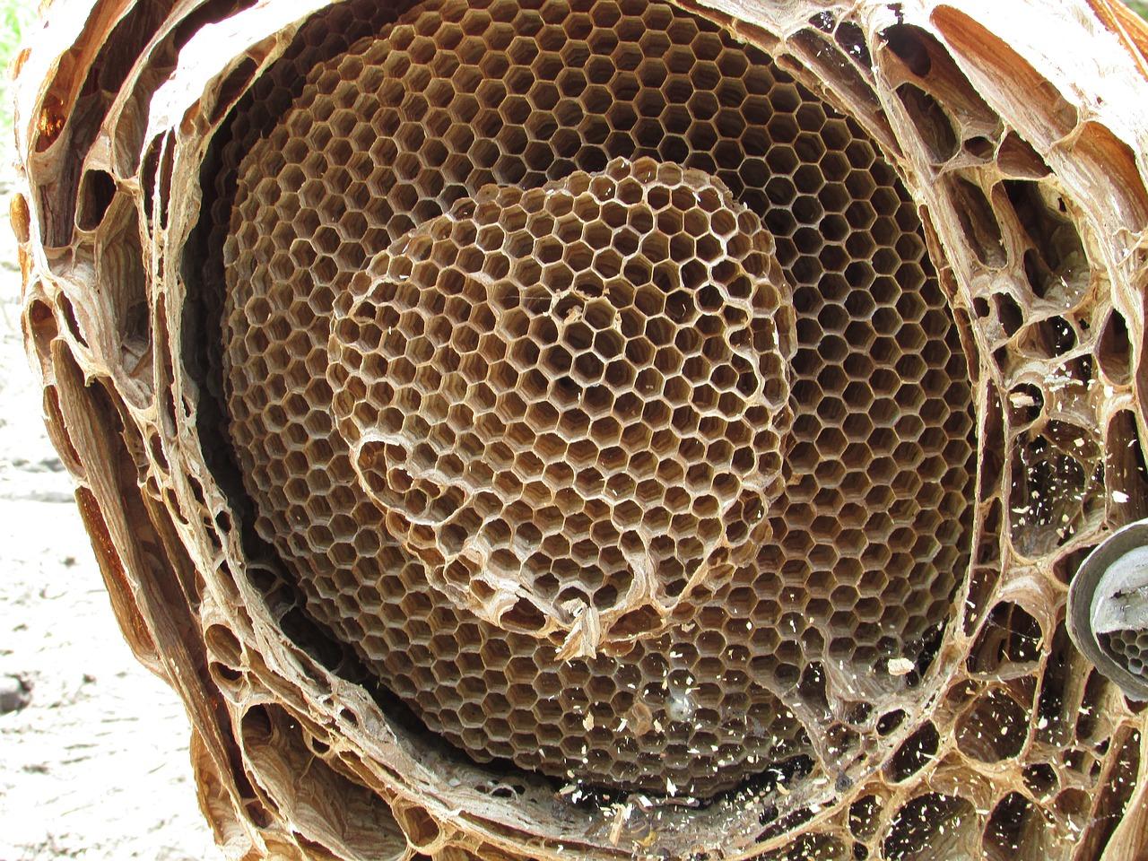 гнездо шершня 7
