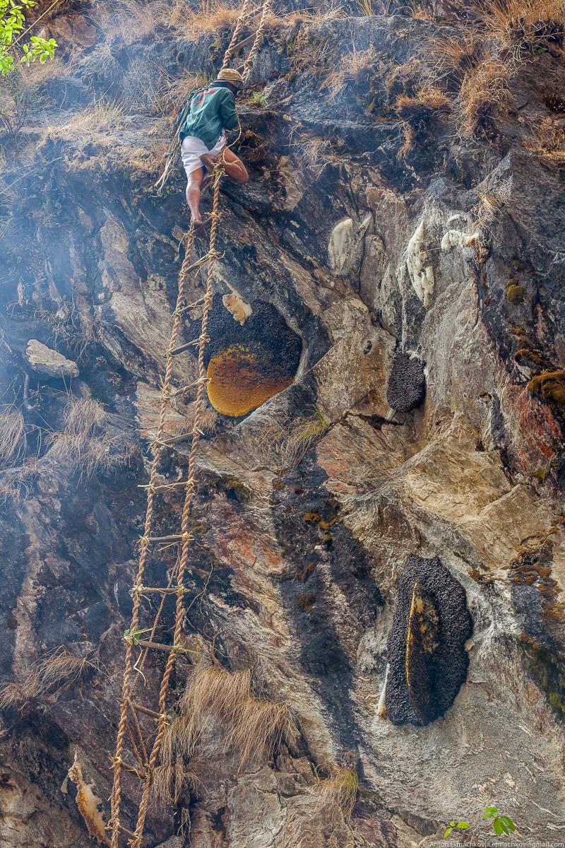дикие пчелы в горах фото 12