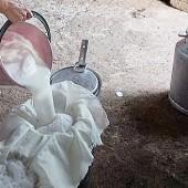 Молоко кобылы