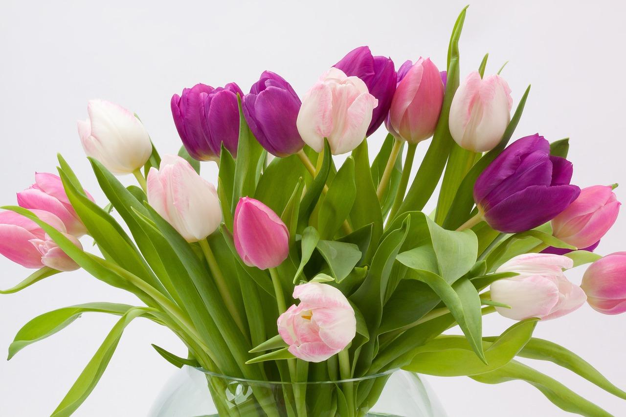 tulip-1230392_1280