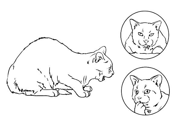 кот подавился что делать - шаг 1