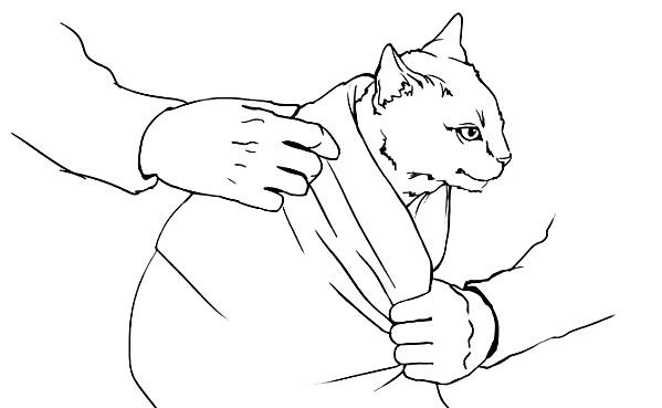 кот подавился что делать - шаг 2