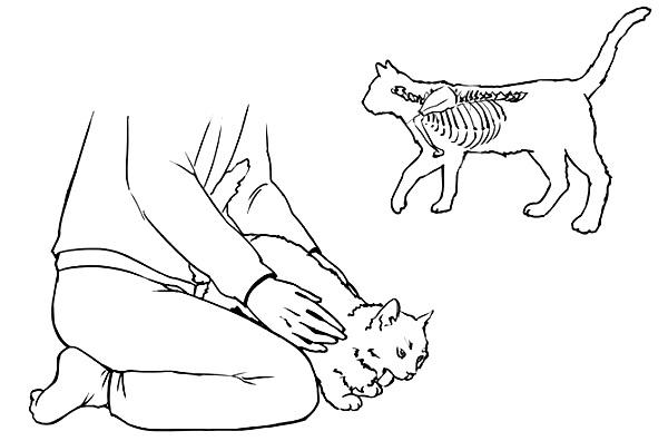 кот подавился что делать - шаг 4
