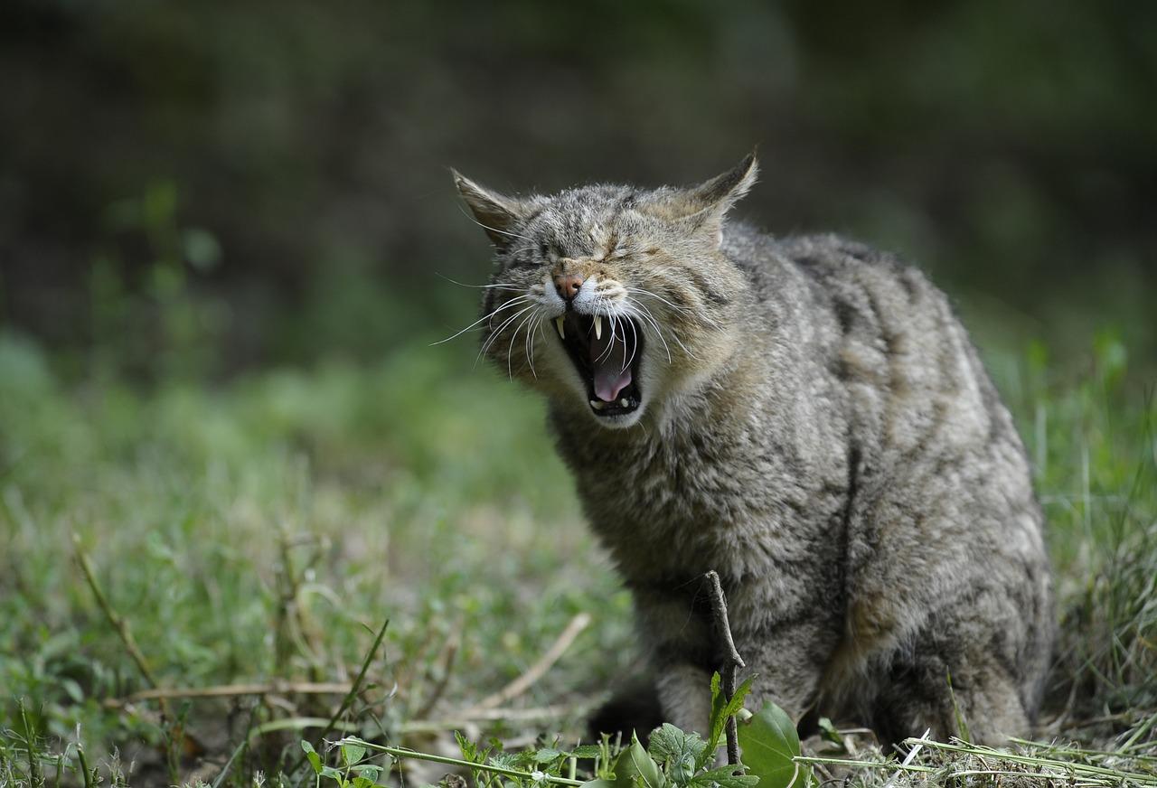 кот подавился что делать