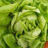 Кочанный салат — сорта
