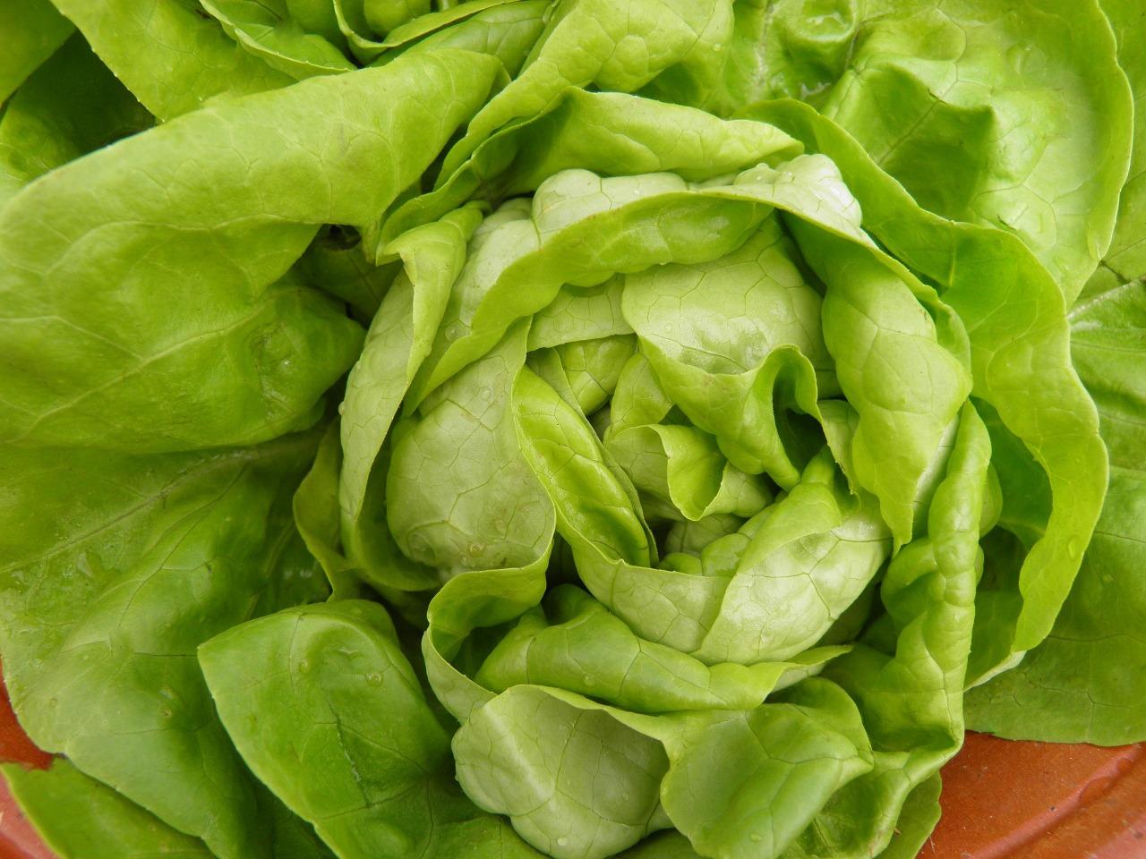 кочанный салат - сорта